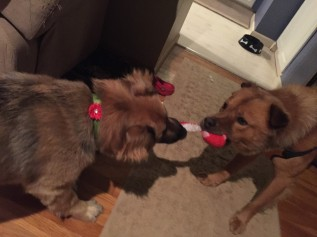 timber and jessie playing tug of war